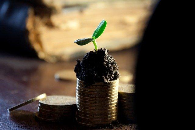 コインから出る芽